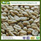 green coffee/bulk green coffee beans