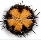 Chile Top Quality Frozen Sea Urchin