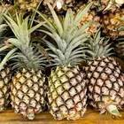 FRESH PINEAPPLES FROM AFRICA