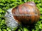 Cosmetic Materia of Natural Snail Extract