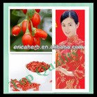 Factory Supply Pure Natural 2013 Chinese Most Salable Goji Berry/Goji/Wolfberry