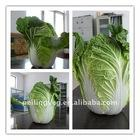 Chinese Fresh Green Cabbage NEW